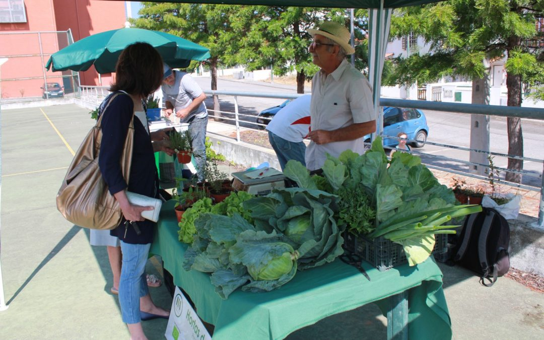 Candidaturas abertas para transformar e comercializar produtos agrícolas