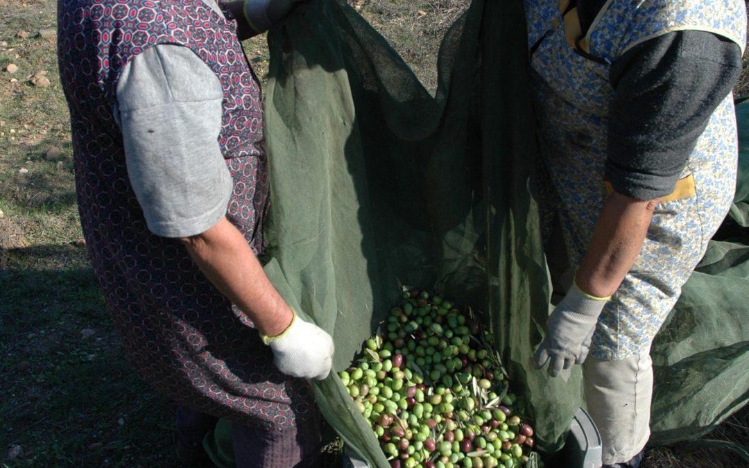 Mais 200 mil euros para apoiar a transformação e a comercialização de produtos agrícolas no Ribatejo Interior