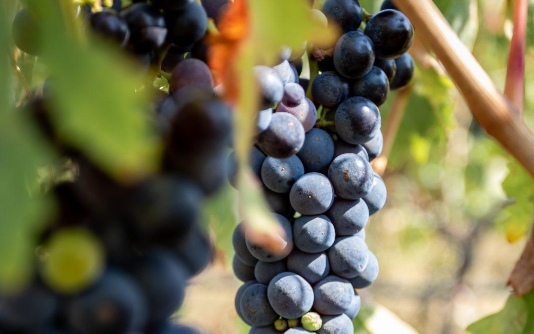 10.2.1.2. Apoio à aquisição de capacidade de armazenagem – Setor do Vinho